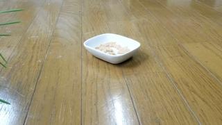180922-08-ムウ-レオ.jpg