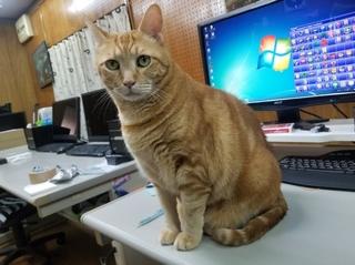 200922-01-ムウ-レオ.jpg